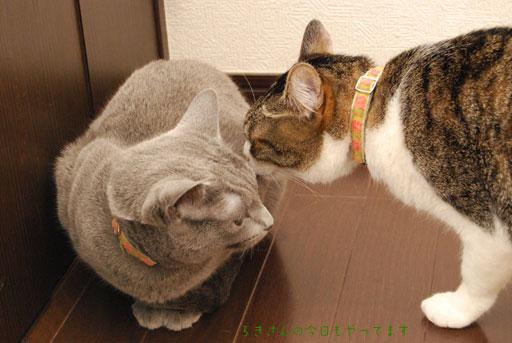 suzu100424-3.jpg