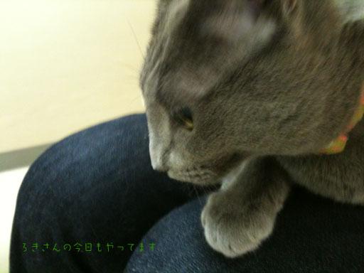 suzu100505-3.jpg