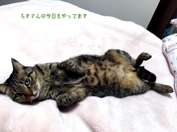 suzu160328-4.jpg