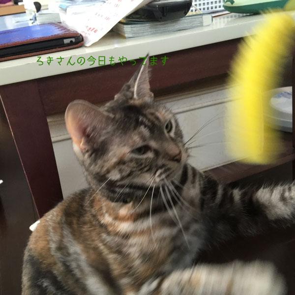 suzu160717-3.jpg