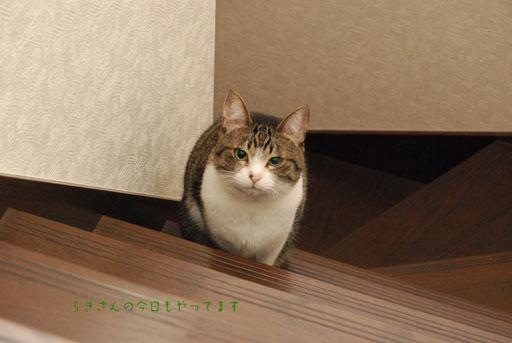 suzu100424-2.jpg